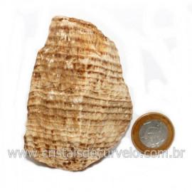 Aragonita do Peru Pedra Bruto Mineral de Garimpo Cod 122989