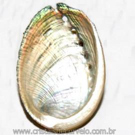 Abalone Concha Petrificada Ideal P/ Colecionador Cod 109825