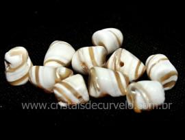 10 Conchas Tamanho Pequeno Lapidado Para Montagem de Pingente ou Colar Furo Horizontal reff 11.7