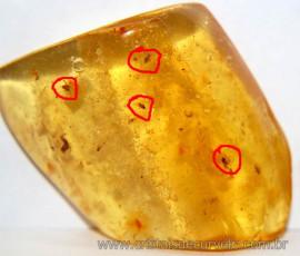 Ambar Natural Com Inseto Fossilizado Pedra Organica AI8432