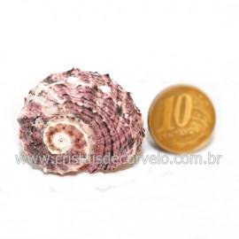Amonite Fossil de Cefalopode Ideal P/Colecionador Cod 126456