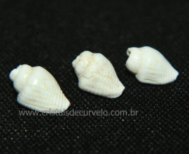 03 Conchas de Caracol do Mar Furo longitudinal Reff 101653