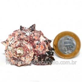 Amonite Fossil de Cefalopode Ideal P/Colecionador Cod 126455