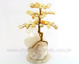Árvore Da Felicidade Pedra Citrino na Drusa REFF AD5089
